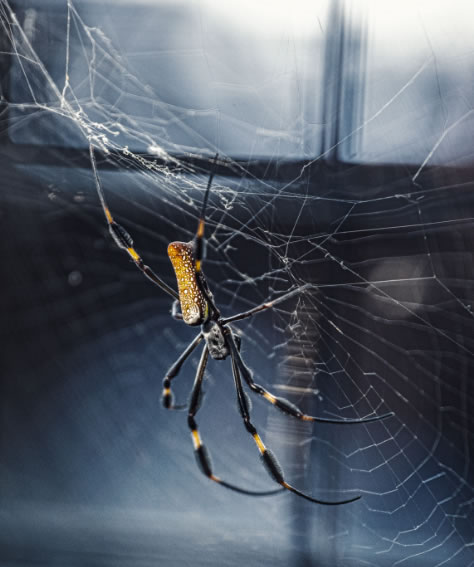 Spider and residential pest control Lindale Texas